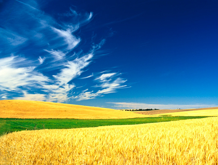 Paluouse Harvest