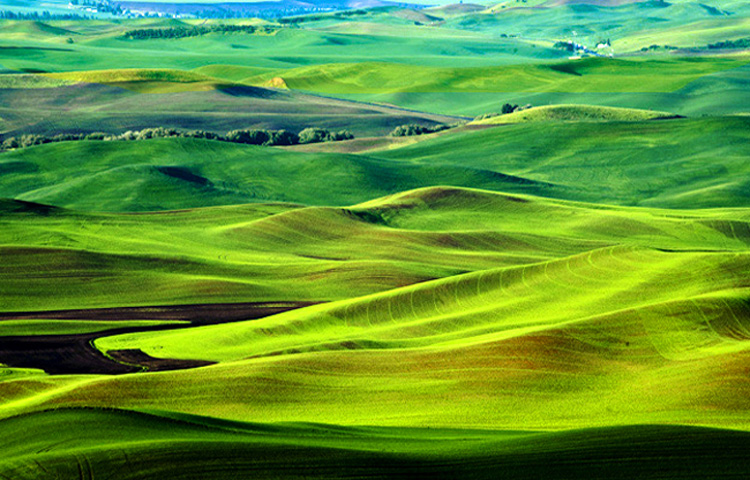 Patterns of the Palouse 4